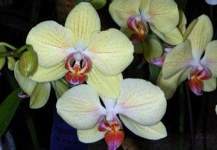 Wallpaper orchids, flowers, branch, close-up Desktop Background HD Free Photography, Photo > Flowers Wallpapers > WallpapeprsCraft