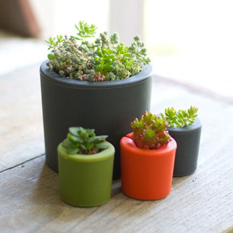 Opus Garden // Rootcup Spring // Set of 8 $32
