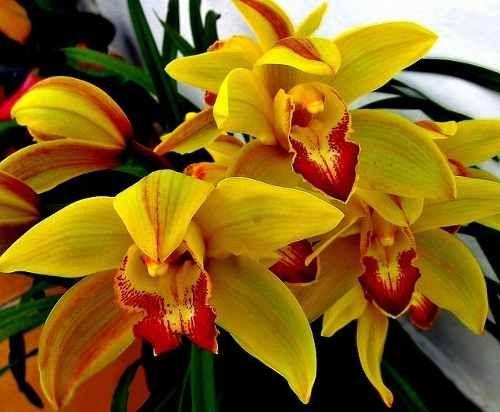Para Orquideas, Orquideas Cactus, Flores Exoticas, Flores Lindas, Orquídeas Raras, Raras Fotos, Amo Orquídeas, Naturaleza Flores, Naturaleza Bella