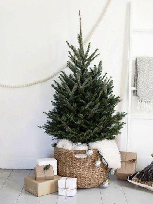 Weihnachtsbaum Im Topf Richtig Pflegen Und Noch Viele Jahre Bewundern Mit Bildern Minimalistisch Weihnachten Weihnachten Dekoration Skandinavische Weihnachten