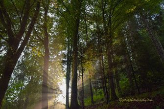 Bosque junto a las Cataratas de Triberg