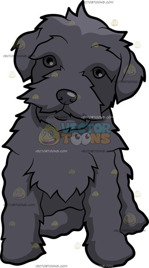 A Friendly Schnoodle Dog Cartoon Clipart Vector Toons