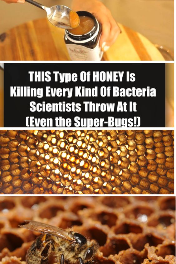 THIS Type of HONEY is Killing Every Kind of Bacteria Scientists Throw At It (Even the Super-Bugs!):