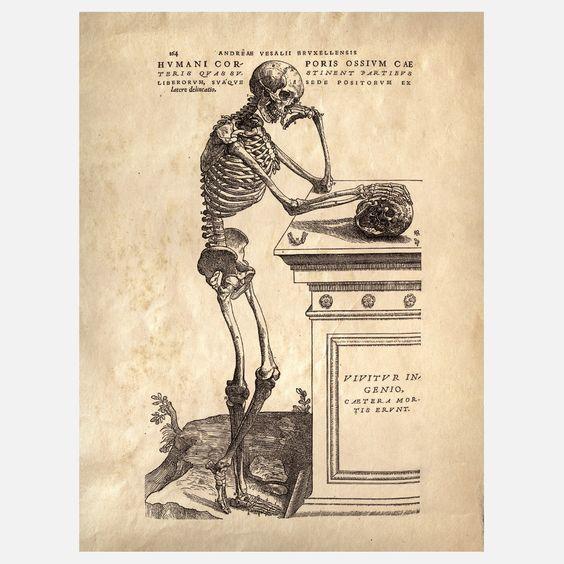 Anatomy Skeleton Print III