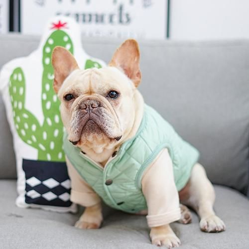 Frenchie World Light Jacket French Bulldog Clothes French