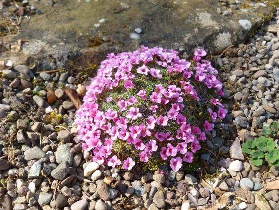 Quelles plantes pour son jardin sec id es et conseils utiles deco sons and design for Choisir plantes jardin