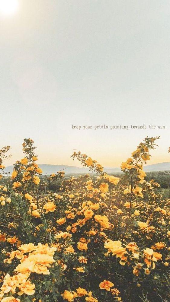 Kata Kata Bijak Inggris Wallpaper Quotes Flower Quotes Iphone Wallpaper