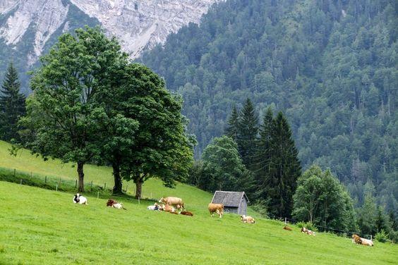 Resting. A farm outside Radstadt, Upper Austria by ilias nikoloulis on 500px.