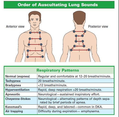 Order of Auscultating Lung Sounds: