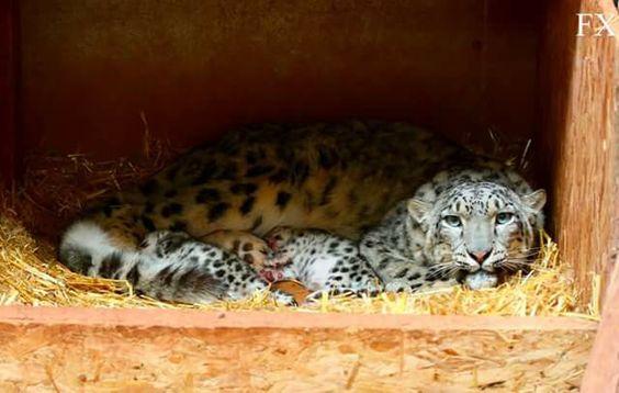 Stunning photo taken by vet at Safari Zoo in Dalton in Furness