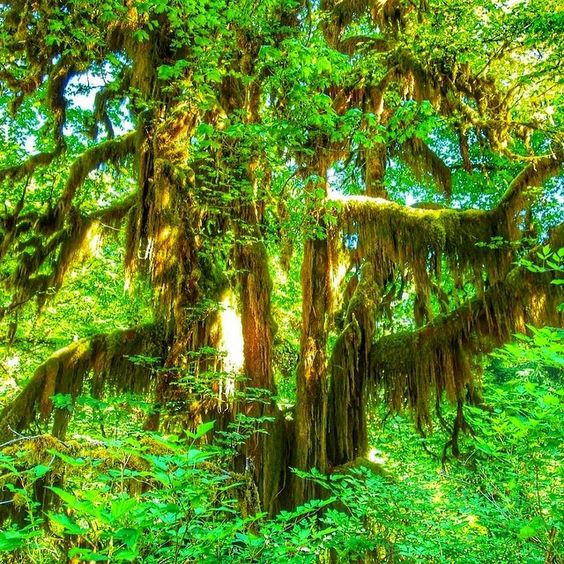 #rsa_trees #rsa_trees_hdr  #hohrainforest #HDR another one for the tree challenge. #Padgram