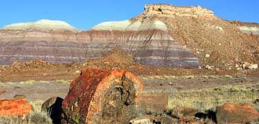 Petrified National Forest,AZ