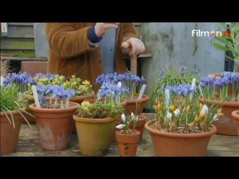 The Gardener's Daughter Episode 2