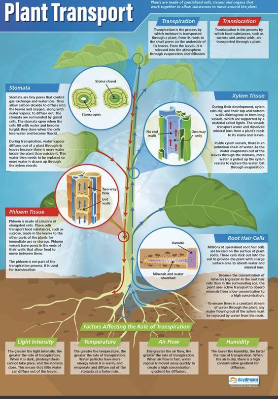 Clase De José Angel 1º 3º Y 4º Eso Inglés Salesianos Santander Página 13 Ciencia De Las Plantas Cuidado De Ancianos Lecciones De Biología