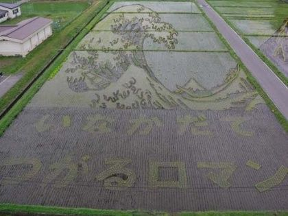 #3 of 6  Images are growing (pun intended!) clearer in this rice field of purpose planted art. In Japan.    http://naindejardin.blogs.marieclaireidees.com/index-9.html