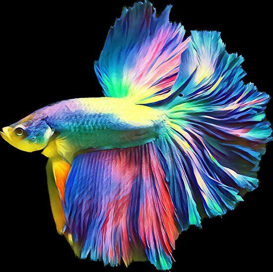 Rainbow Halfmoon Betta Pet Fish Poster By Catxel In 2020 Betta Aquarium Kampffisch Schone Fische