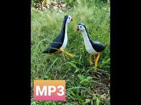 Suara Burung Ruak Ruak Bird Sound Ruak Ruak Mp3 Bird Mp3 Sound