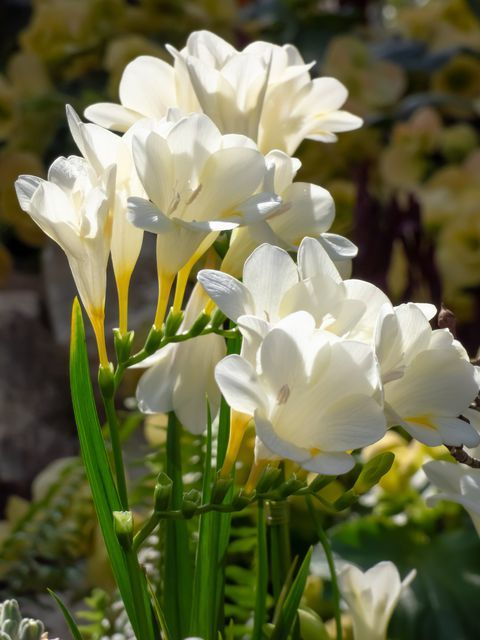 Satisfy Your Green Thumb With These 60 Garden Friendly Flowers Planting Flowers Freesia Flowers Flower Plant Images