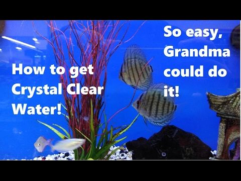 5 Easy Tips To Get Crystal Clear Water Angel Fish Tank Fish Tank Fish Information