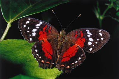 The design of the wings is so simple and yet so intricate. #Beautiful... =)