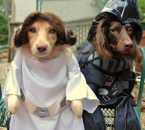 Dachshund Vader and Princess Leia #starwars