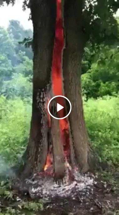 que do arvore queima viva, por ser atingida por um raio