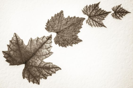 As The Leaves Echoed by Carl Thompson - Photo 48299182 - 500px