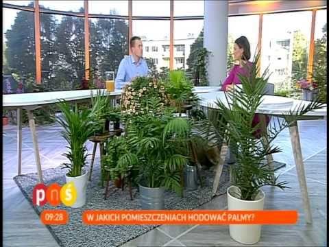 Uprawa Palmy W Domu Youtube Make It Yourself Plants