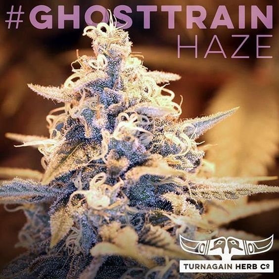 Happy #SativaSaturday! Meet #GhostTrainHaze: High #THC moderate-low #CBD. #pain #depression #appetiteLoss. Low doses are conducive to #concentration and #creativity. #THCo #TurnagainHerbCo #GirdwoodTHC #marijuana #cannabis #EndProhibition