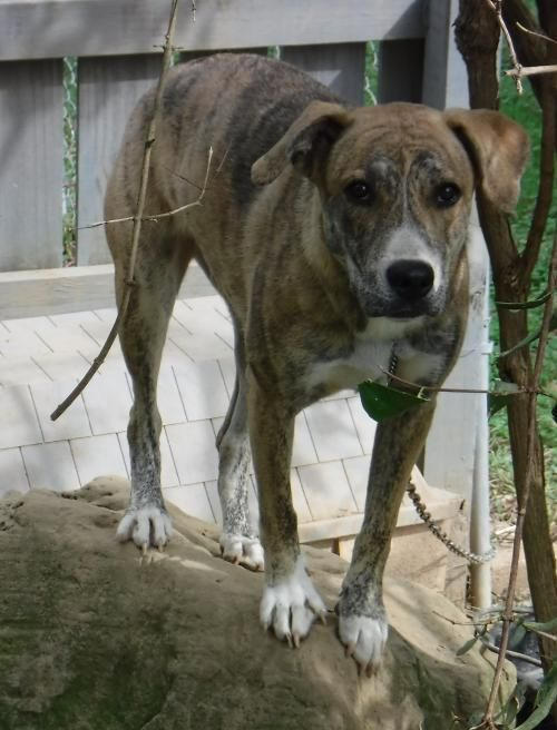 This Lonely Pup Needs A Home Shepherd Labrador Retriever Mixed Medium Coat In Stockport Oh Dog Pets Pet Adoption P With Images Pets Pet Adoption Dog Adoption