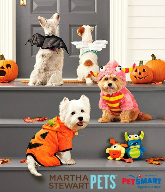 halloween costumes for your pets by marthastewartpets - Pet Halloween Photo Contest
