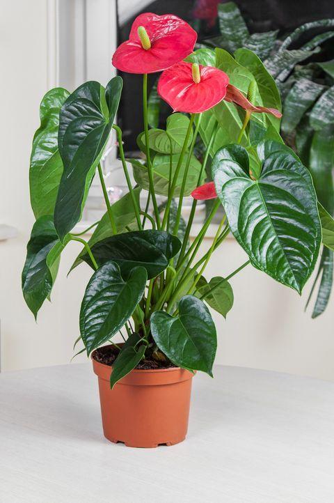 Pin On Plant Wishlist
