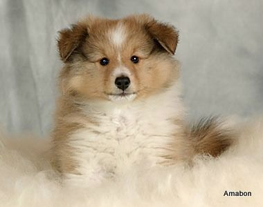 Little fluffy pup
