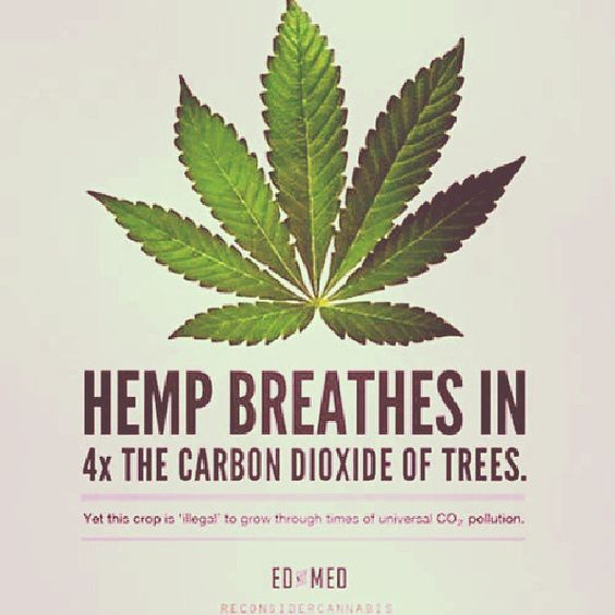 Hemp Fact! <-- Some Benefits of Hemp Made Clothing to The Environment