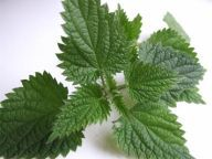 Plantes sauvages - Cuisine Campagne