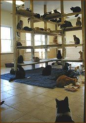 Shelters lady and house on pinterest for Build your own cat scratch tower
