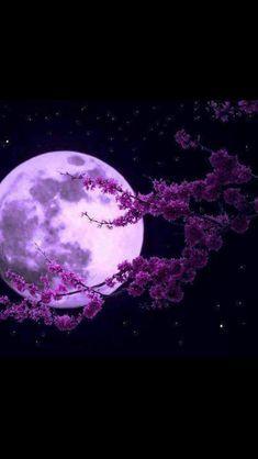 O Poeta A Lua E O Ipe Fotos Da Lua Boa Noite Com Lua Coisas Roxas