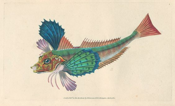 Donovan, E. The natural history of British fishes. London, printed for the author and for F. and C. Rivington, 1802-1808.