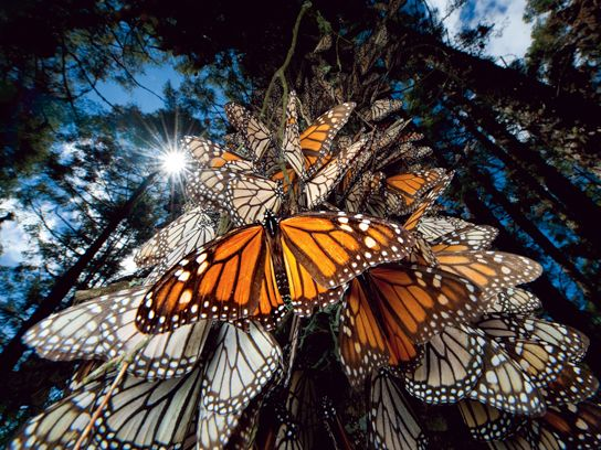 8 Perfect Nature Photos You Won't Believe Are Real - Photo by Joel Sartore  Read more: http://www.rd.com/slideshows/amazing-nature-photos/#ixzz34SqyVz00