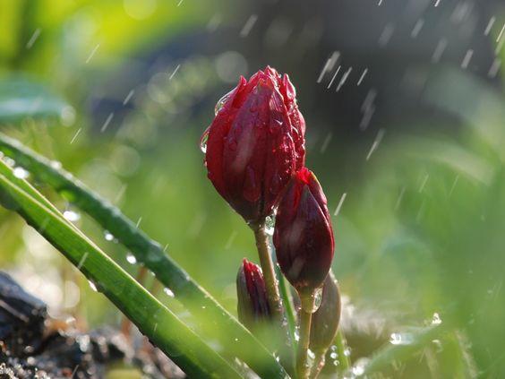 flores na chuva - Pesquisa Google