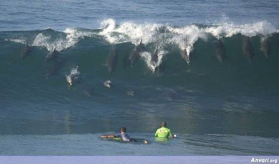 Dolphins...amazing!