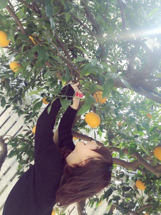 オレンジの木と高橋朱里