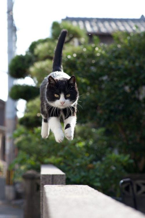 塀をジャンプする野良猫)