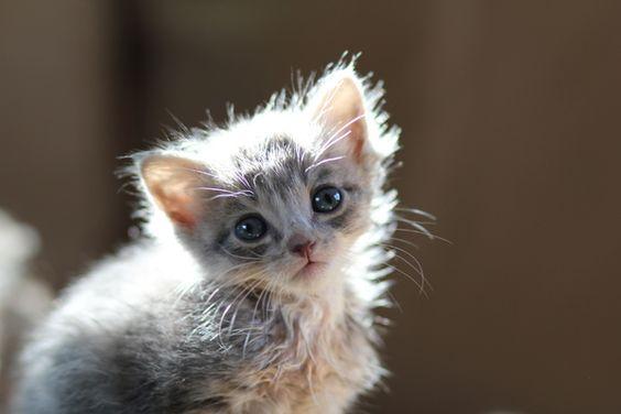 An adoptable kitten.