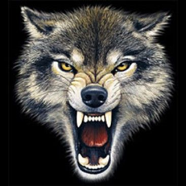 Gallery For gt Wolf Snarling Face Tattoos Pinterest Wolves