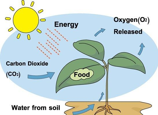 Autotrophic Nutrition Photosynthesis Science Notes Science Clipart