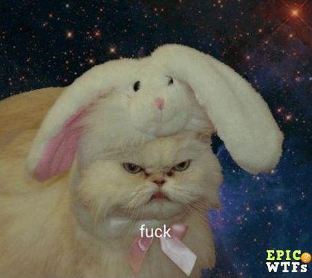 Rabbit cat is unhappy.