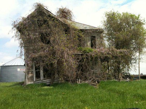 Overgrown....