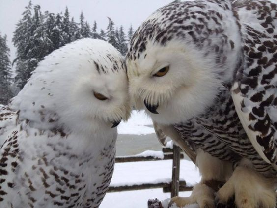 Cute baby white owl - photo#22