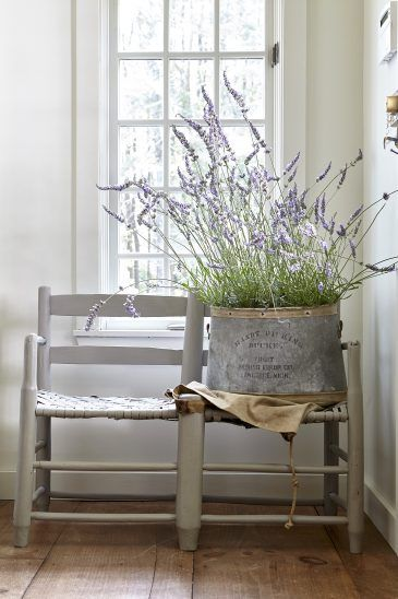 bucket of lavender on a vintage bench. White walls and wide plank pine floors